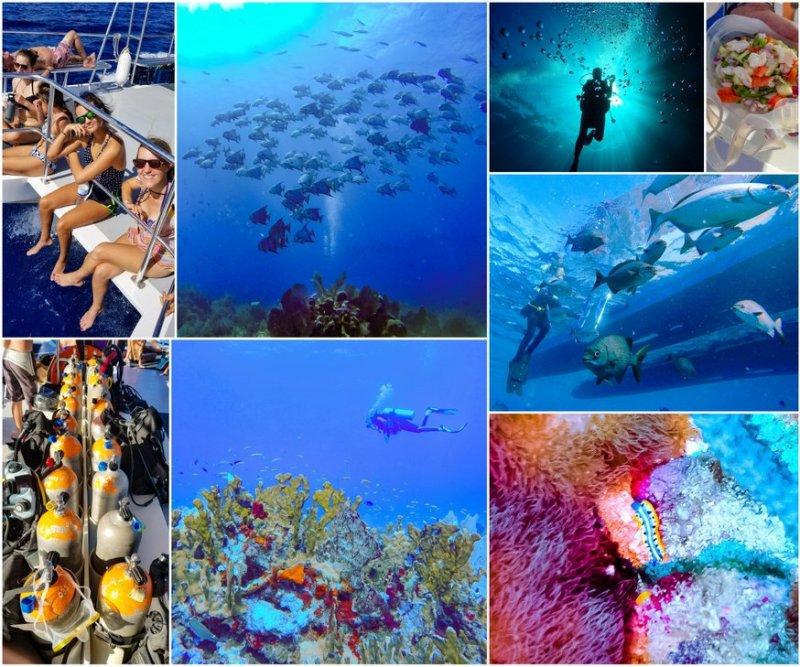 roatan banks dive trip