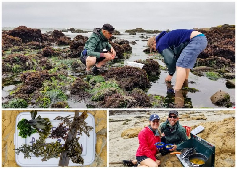 Seaweed Foraging Tours