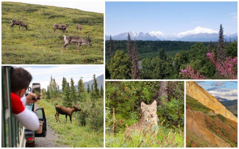 Denali Alaska Tips