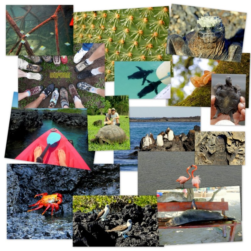 Collage from Galapagos