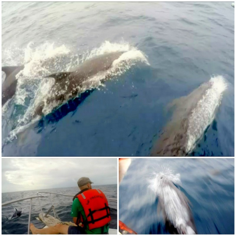 Galapagos Dolphins from boat
