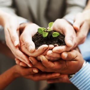 Business growth - Hands holding green plant indicating teamwork