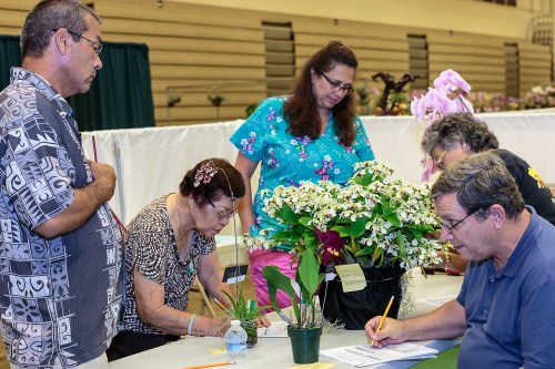Judges take time to measure and describe the awarded plants.  Pictured from left to right are Student Judge Fred Dishman, Accredited Judge Violet Yamaji, Maile Dishman, Williette Wong and Accredited Judge and Chairman Bob Moffit.