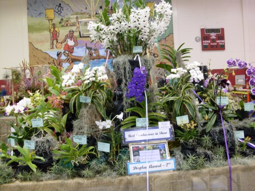 The table top display at Windward had several trophy winning plants.