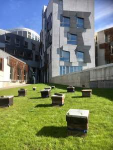 Our Bees at Scottish Parliament