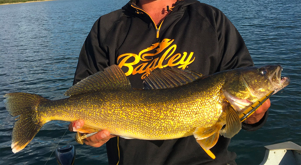 Walleye on the Move