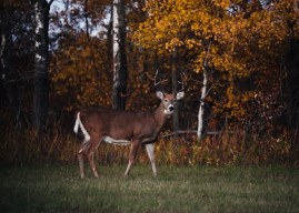 Top 5 Archery Tips for Whitetail