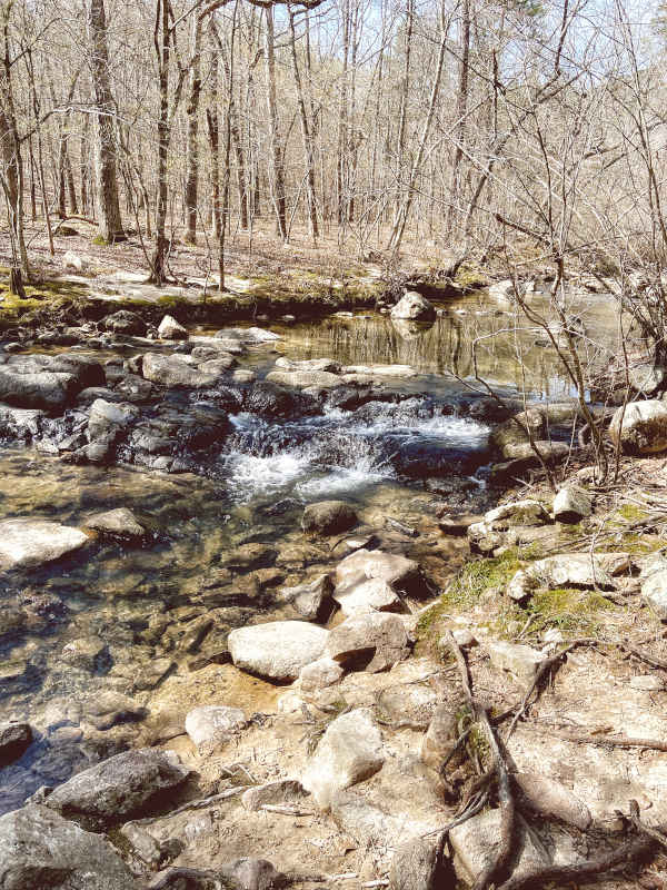 Pickle Creek rushes clear over the stone steps of the creek bed with budding spring woods planted in its moss-dotted banks at Hawn State Park.