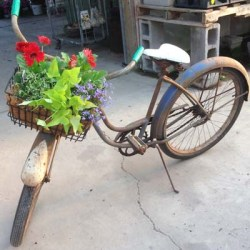 Bicycle Planter Gerbere Daisy
