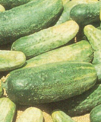 Cucumbers Pickling