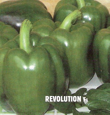 Pepper 'Revolution'