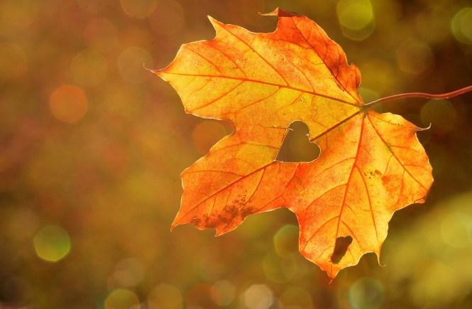 Herbstblatt mit Herz hängt am Baum - Deine Gefühle sind wertvolle Schätze - Hope and shine