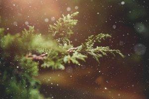 Auf den grünen Ast fallen Schneeflocken - können wir die Welt etwas schöner machen?