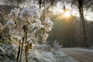 Blumen im Schnee - Vom Glück neu anfangen zu dürfen