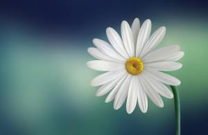 Denk dich gesund - Blume