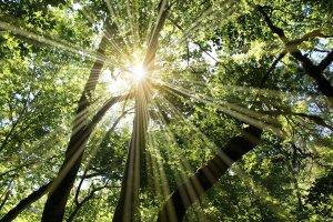 Bäume mit Lichtstrahl