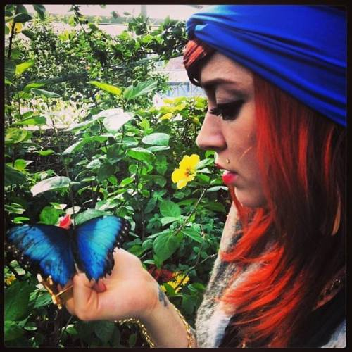 Renee butterfly1