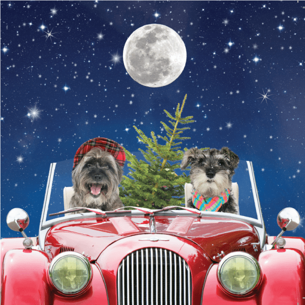 Dogs in Card Christmas Card for Mobile Chemotherapy Unit Charity project