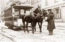 Streetcar-Pulling-Horses