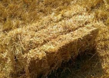 Web straw