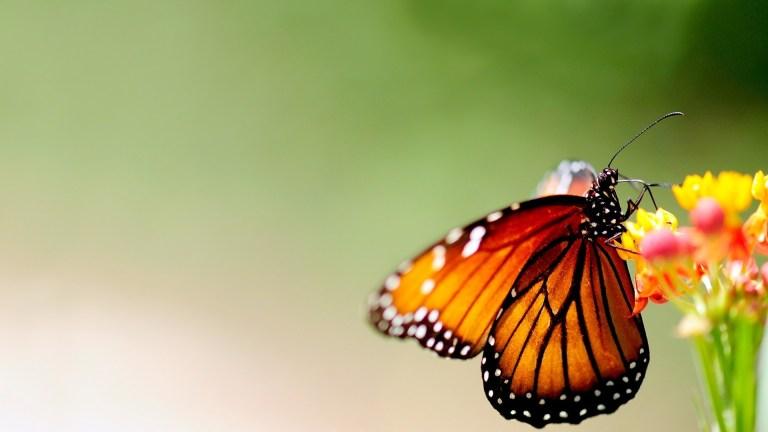 Volare come una farfalla libera. No violenza sulle donne