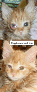 Maggie's progression