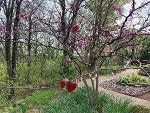 A redbud tree with new red leaves in front of a trail