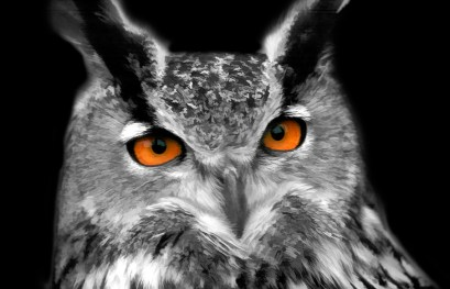 RKM_Eagle-Eyes