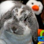 bunny photo Facebook