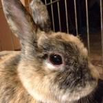 indoor bunny living