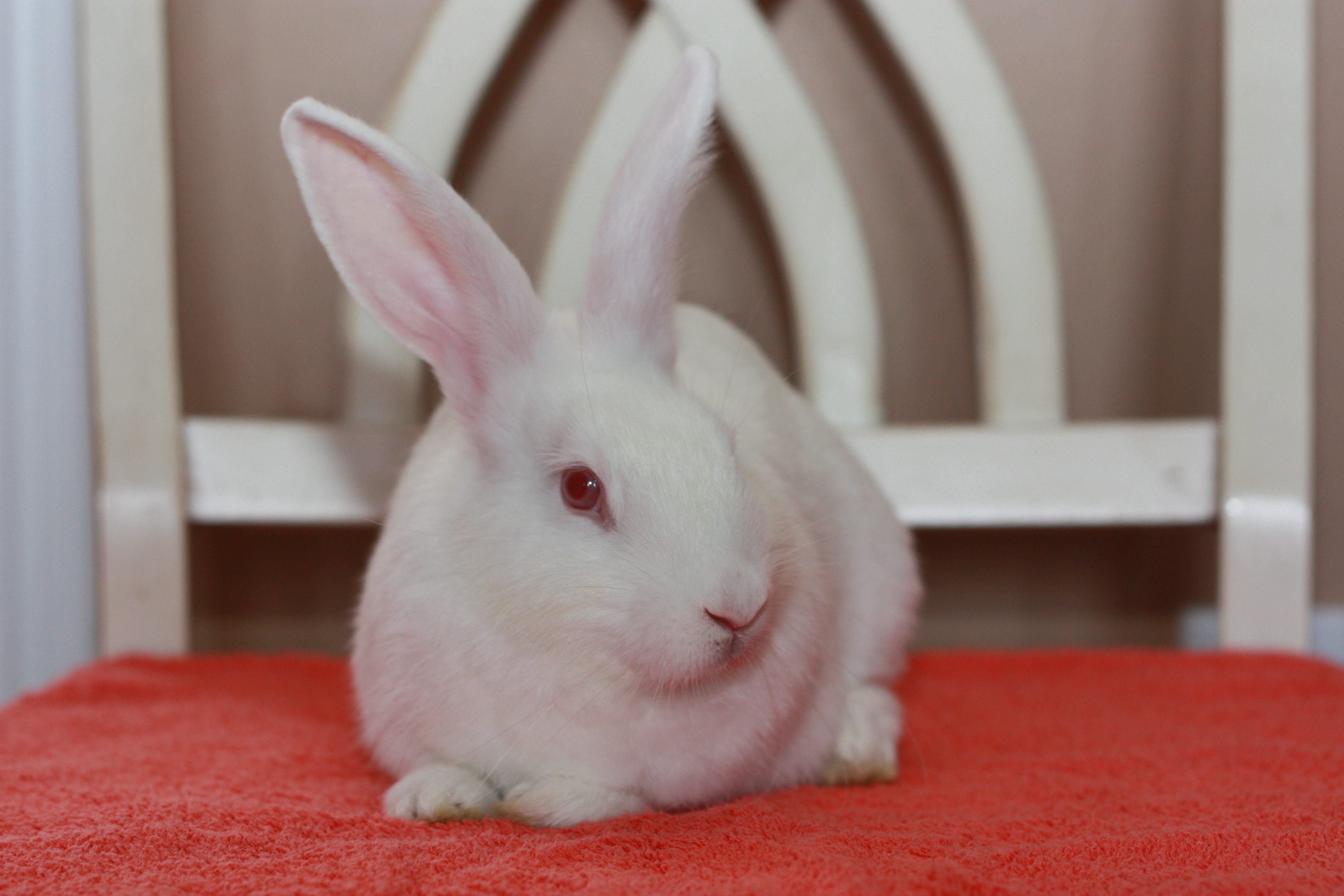 Adopted Animals – 2015 – Hoppy Homes Rescue