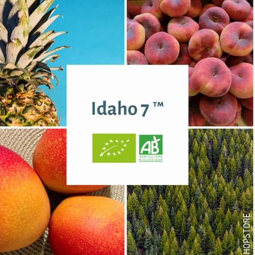 Houblon bio Idaho 7 TM