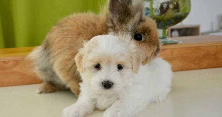 Curiosidades de nuestros amigos los animales