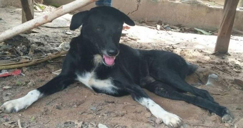 Ping Pong perro que salvo a un bebe en Tailandia