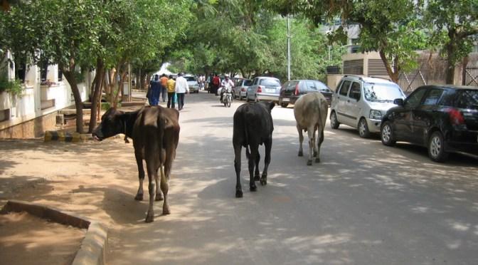 印度遊記(二) – 馬路如虎口
