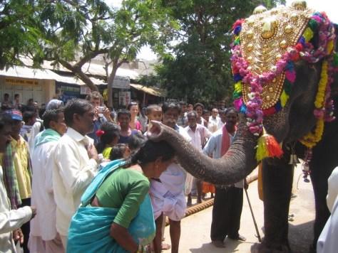 India Holy Elepant
