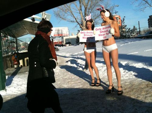 PETA bunnies protest fur industry in bikinis