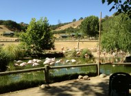 Safari West (1)