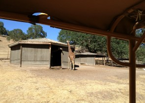 Safari West (10)