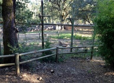 Safari West (118)