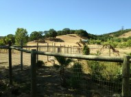 Safari West (2)