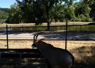 Safari West (21)