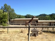 Safari West (23)