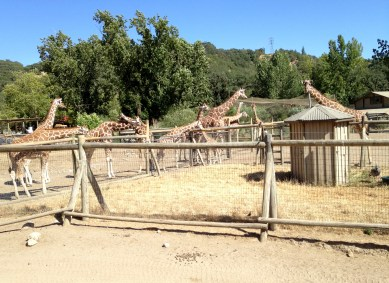 Safari West (25)