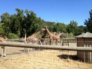 Safari West (32)