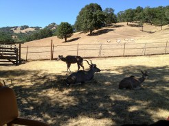 Safari West (5)