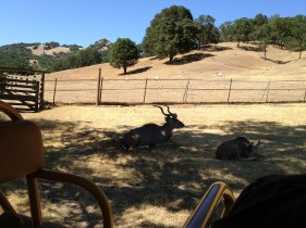 Safari West (8)