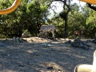 Safari West (81)