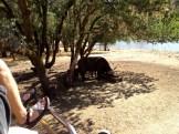 Safari West (91)