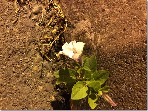 Wall Flower (3)